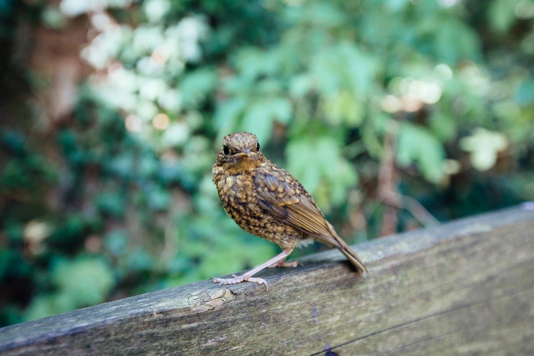 vogel auf der bank
