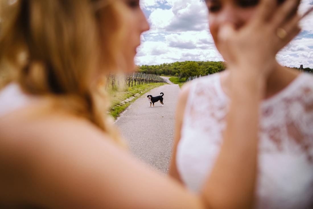 Der Hund im Fokus