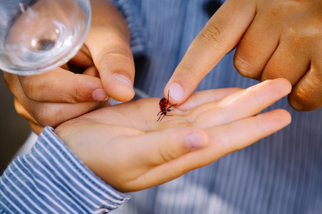 Kinder spielen mit Käfer
